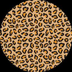 sccheetah cheetah cheetahprint animal animalprint freetoedit