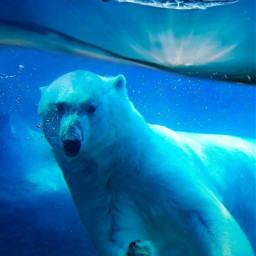 freetoedit madewithpicsart dero_d shark bear