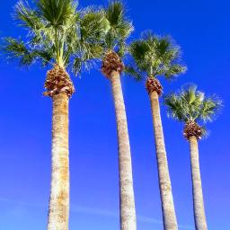 freetoedit december posing waving palms