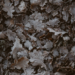 winter leaves background backgrounds freetoedit