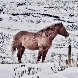 angeleyesimages horse horses winter snow freetoedit