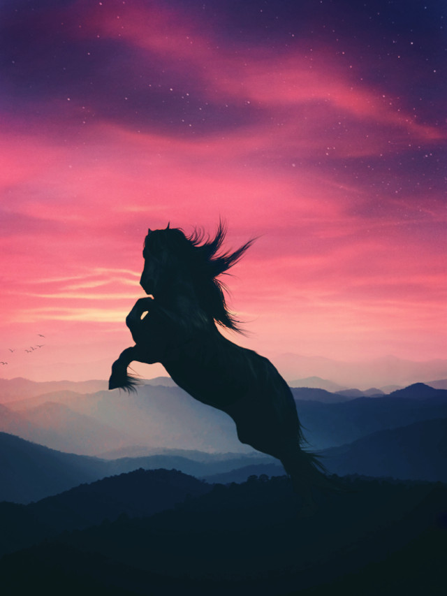 """Don'T LeT tHe BeHaViOr oF oTHerS DesTroY yOur iNNeR PeaCe.🕊""  https://m.youtube.com/watch?v=jnTaMgrw24Y . . .  #red #joy #peace #horse #silhouette #galaxy #dream #background #wallpaper #madewithpicsart #sunset #mountains  #freetoedit"