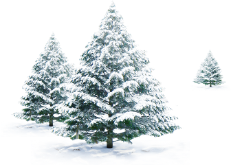 trees winter snow frost freetoedit