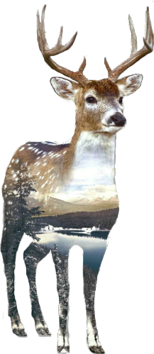 deer double_exposure doubleexposure ftestickers animal freetoedit