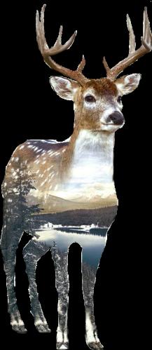 deer double_exposure doubleexposure ftestickers animal freetoedit