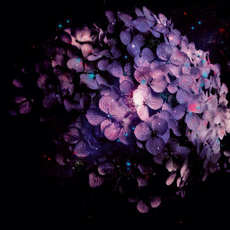 freetoedit hydrangea flower colorchange picsarteffect