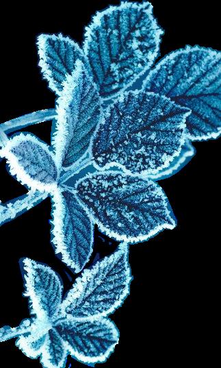 #frozen#leaf#ice#blue