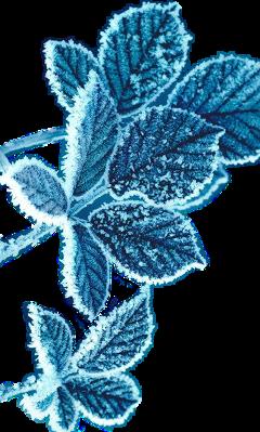 frozen leaf ice blue freetoedit scfrozenleaf frozenleaf