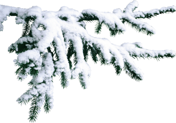 freetoedit winter branch snow frost