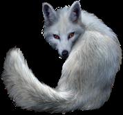whitefox winter snow frost animal freetoedit