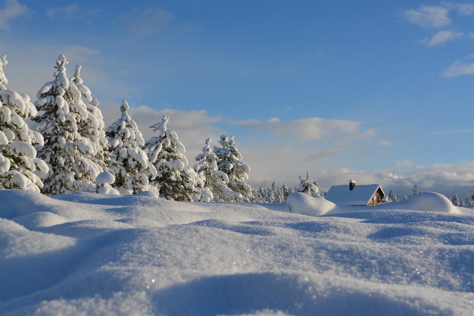 Create a cool remix! Unsplash (Public Domain) #snow #winter #christmas #background #backgrounds #freetoedit
