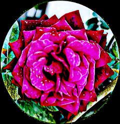 flower happytaeminday road naturephotography naturesbeauty freetoedit