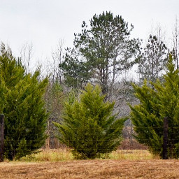 freetoedit trees overcast cold landscape
