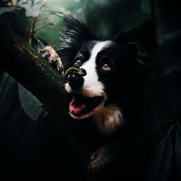 justedited notmine photography dog bordercollie