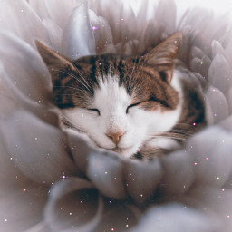 cat cozy kitty cute freetoedit