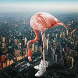 freetoedit nike fashion flamingo gigantanimals