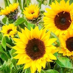 iran flower mr_alaki_khosh freetoedit mr
