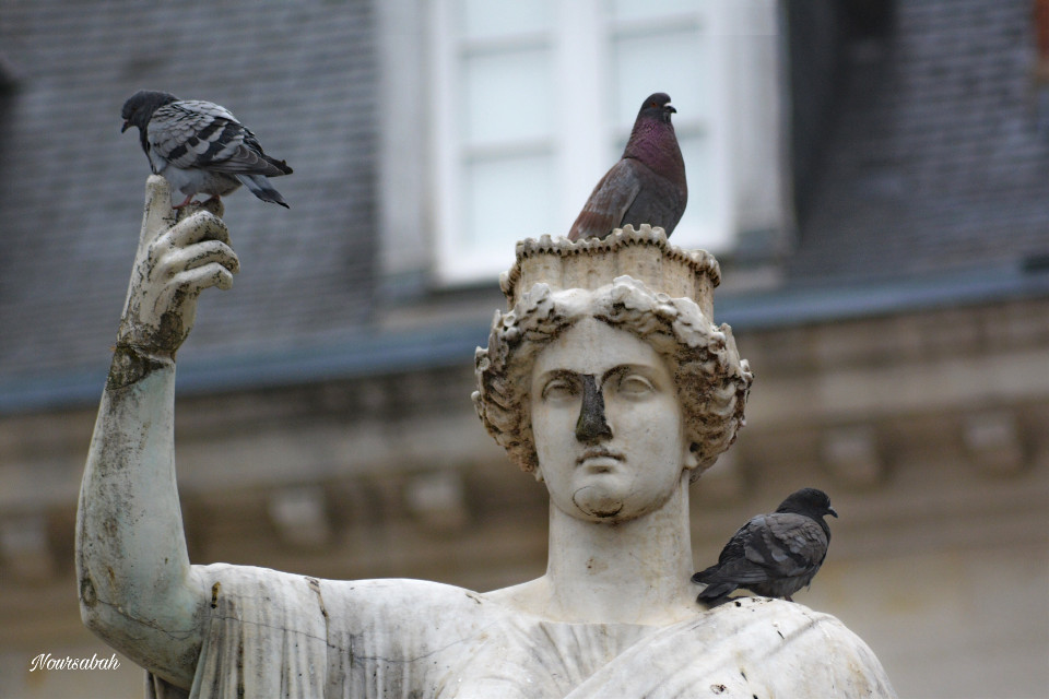 #statue #pigeon #photography