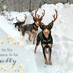 ecfestivepets festivepets snow puppies reindeers