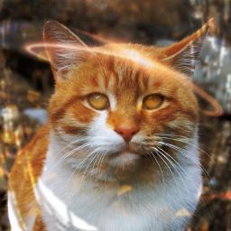 cat cats picsart pic art freetoedit