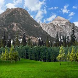 forest nature mothernature mountain grassland