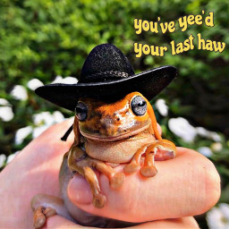 freetoedit frog frogmeme frogs