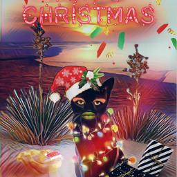freetoedit weird cat christmasmakeup snake srcmerrychristmas