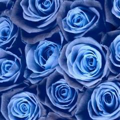 bluelady303