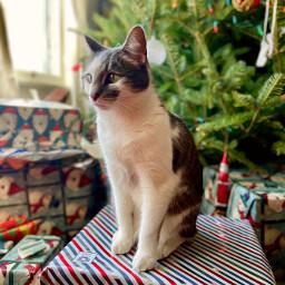 freetoedit festivepets