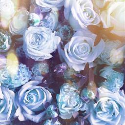 freetoedit rose roses flowers blueaesthetic