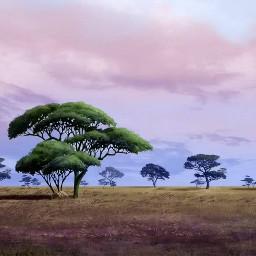 africa savannah nature grassland biome