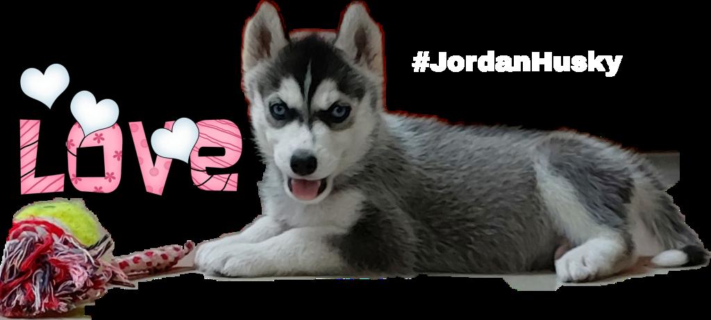 #JordanHusky