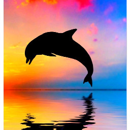 freetoedit replay dolphins sunset