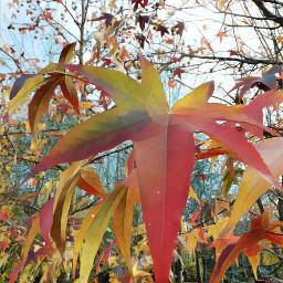 leaf tree nature