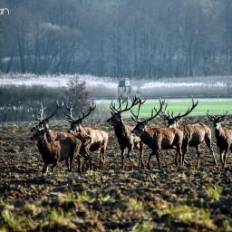 deers wildlife nature wildanimals winter