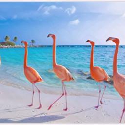 freetoedit flamingo beach averiegrace pastel