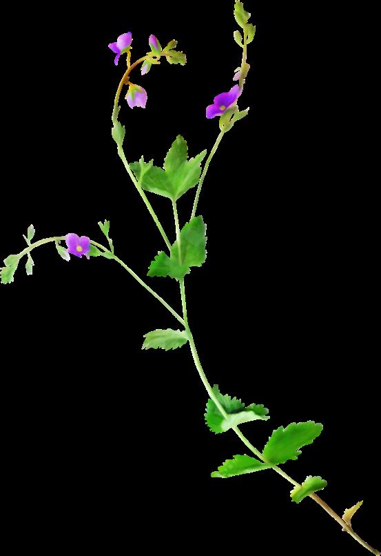 #lucymy #flowerslucymy #ohlala
