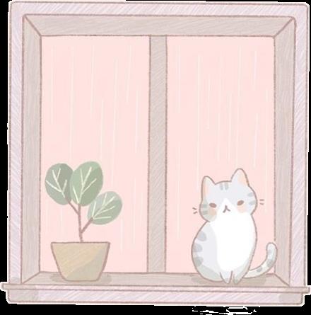 #gatito #ventana