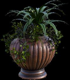 freetoedit nature naturelovers maceta planta