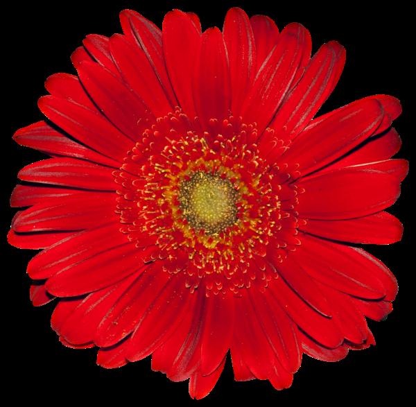 #lucymy #flowerslucymy #ohlala #red