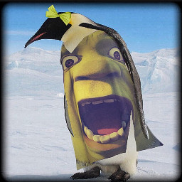 shrek dress penguin love life