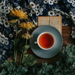 tea hottea cozy freetoedit