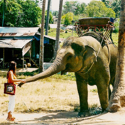 interesting nature summer palmtree elephant pctravel