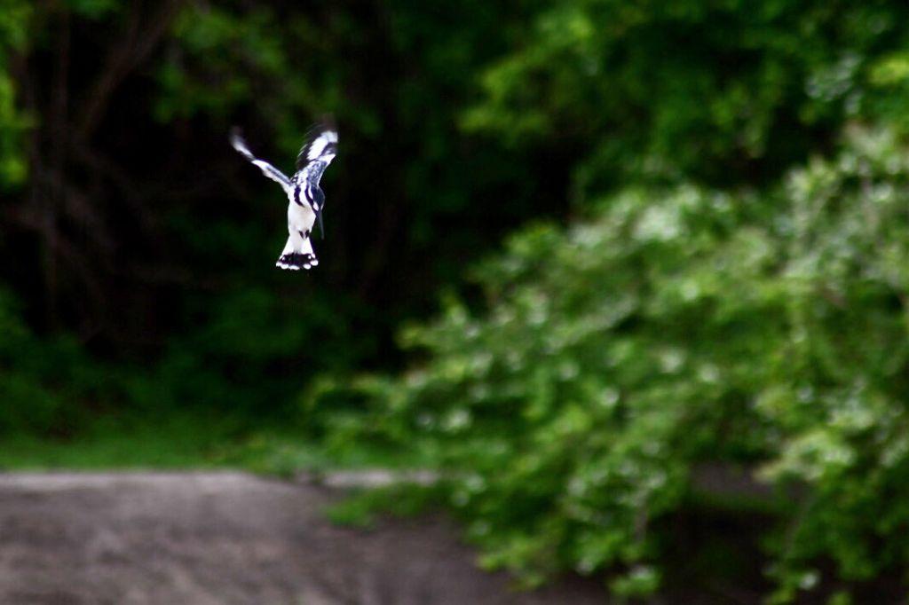 ⓀⒾⓃⒼ ⒻⒾⓈⒽⒺⓇ   #photography #picsartvip #picsartcommunity #animalphotography #travel #adventure #adventuretime #happyvibes #beautiful #beautifulnature #freetoedit