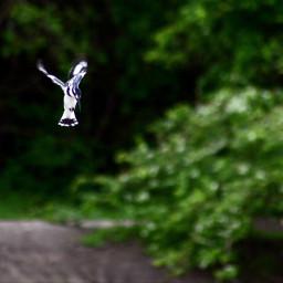 photography picsartvip picsartcommunity animalphotography travel freetoedit