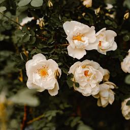 flowers nature background backgrounds freetoedit