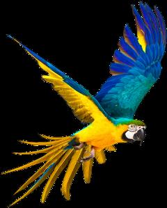 freesticker bird parrot remixit freetoedit