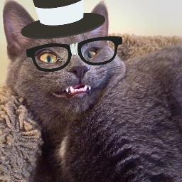 cat cats kitty princess animallover