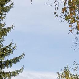 myphoto myclick sky bluesky clouds pctheblueabove