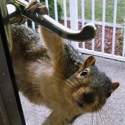 freetoedit face peeking holdingon doorknob